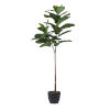 This item: Green Fiddle Leaf Fig Tree