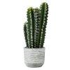 This item: Green Cactus in Concrete Pot