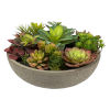 This item: Green Mixed Succulent in Concrete Pot