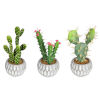 This item: Green Cactus Assorted Potted, Set of 3