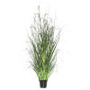 This item: Green Sheeps Grass in Pot