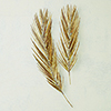 This item: Studio A Small Antique Brass Palm Leaf