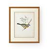 This item: Gold Delicate Birds V Print