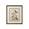 This item: Black Edwards Bird Pairs VII Print