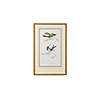 This item: Gold Lemaire Hummingbirds I Print