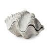 This item: Virginia II Off-white Seashell Box