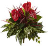 This item: 24 In. Mixed Anthurium Bush, Set of Two