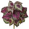This item: Wax Begonia Bush, Set of Six