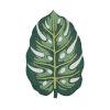 This item: Cucina Green Rectangular: 3 Ft. x 4 Ft. 6 In. Rug