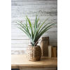 This item: Green Artificial Aloe in Woven Pot