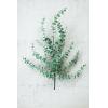 This item: Green Artificial Eucalyptus Stem