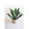 This item: Green Artificial Agave In Painted Plastic Pot