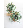 This item: Green Artificial Airplant in Pot, Set of Two