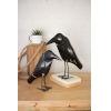 This item: Antique Black Iron Crow, Set of Two