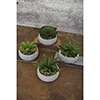 This item: Set of Four Artificial Succulents In Low Round Cement Pots