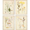 This item: Antique Botanical Neutral Framed Wall Art, Set of 4