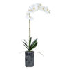 This item: Eponine Charcoal Gray Orchid