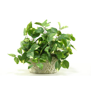 Pothos in Oblong Ceramic Planter