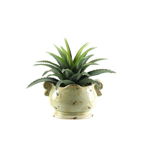 Star Plant Succulent in Oblong Ceramic Planter