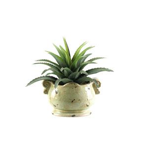 Star Plant Succulent in Oblong Ceramic Planter