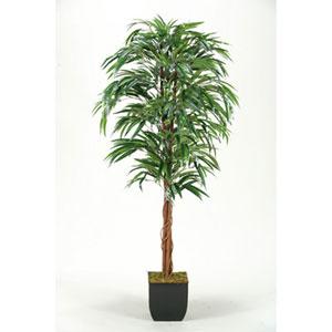 6 Ft. Weeping ficus Tree in Metal Planter
