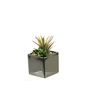Succulent and Echeveria in Square Black Ceramic Planter