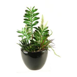 Succulent, Aloe and Echeveria in Round Ceramic Planter
