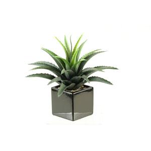 Star Succulent in Square Ceramic Planter