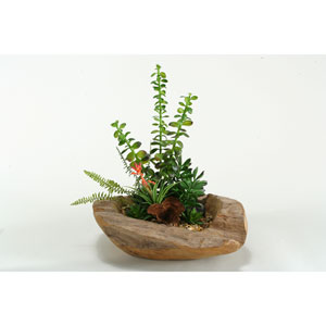 Fern, Money Plant, Blooming Succulent and Aloe in Wooden Bowl