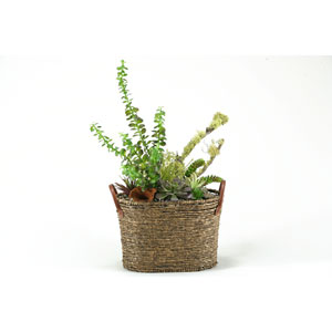 Mixed Money Plant, Easter Grass, Echeveria, and Succulents in Basket with Handles