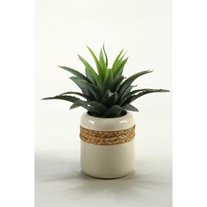 Star Succulent in Round Ceramic Planter