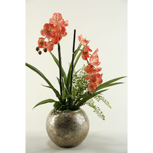 Cream and Red Vanda Orchid in Silver Ball Planter