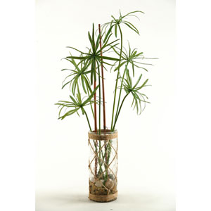 Papyrus Grass in Glass Vase with Seagrass