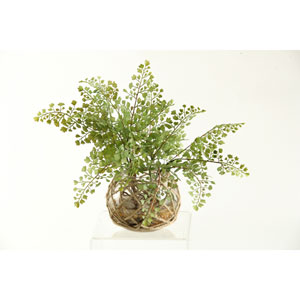 Flat Iron Fern in Glass Bowl with Seagrass