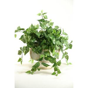 Pothos Ivy in Ceramic Pedestal Urn
