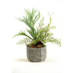 Mini Staghorn Fern and Flat Iron Fern in Concrete Bowl