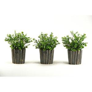 Dark Green Boxwood Spray in Oval Ceramic, Set of Three