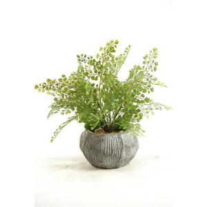 Fla Iron Fern in Concrete Bowl