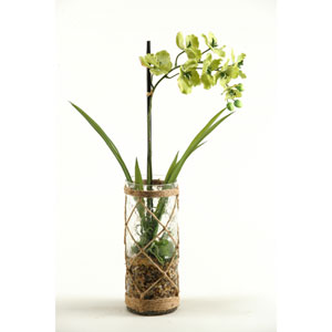 Green Vanda Orchid in Glass Vase with Seagrass