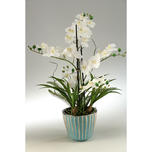 Cream Orchids in Round Teal Ceramic Planter
