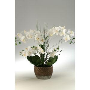 Cream Orchids in Oval Ceramic Planter