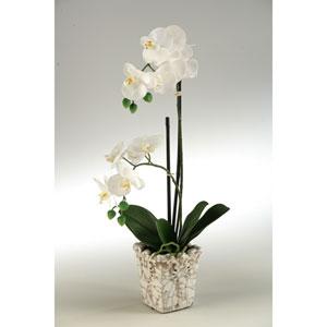 Cream Orchids in Crackle Finish Ceramic Planter