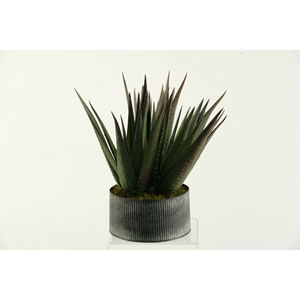 Agave Plant in Round Tin Planter