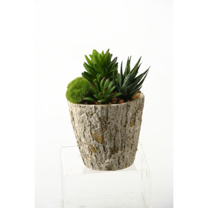 Aloe and Succulents in Oak Look Cement Planter