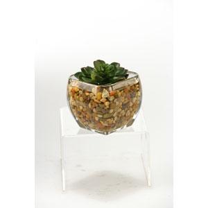 Small Echeveria in Glass Cube