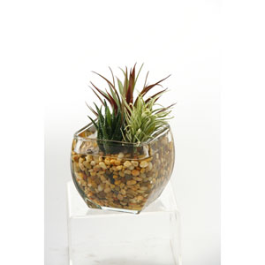 Aloe and Easter Grass in Glass Cube