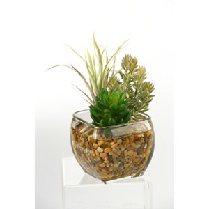 Succulent and Flocked Burro Tail in Glass Cube