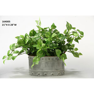 Pothos Ivy in Oval Metal Planter