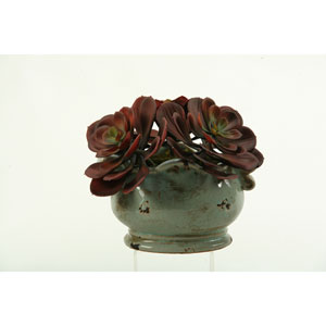 Red and Brown Echeveria in Ceramic Planter