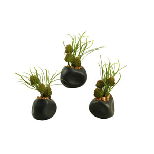 Spiny Protea and Pearl Grass in Ceramic Planter, Set of Three